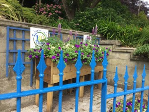 Ilfracombe in Bloom 2016